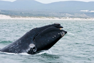 From Cape Town: Trip to Hermanus with Whale Watching Cruise