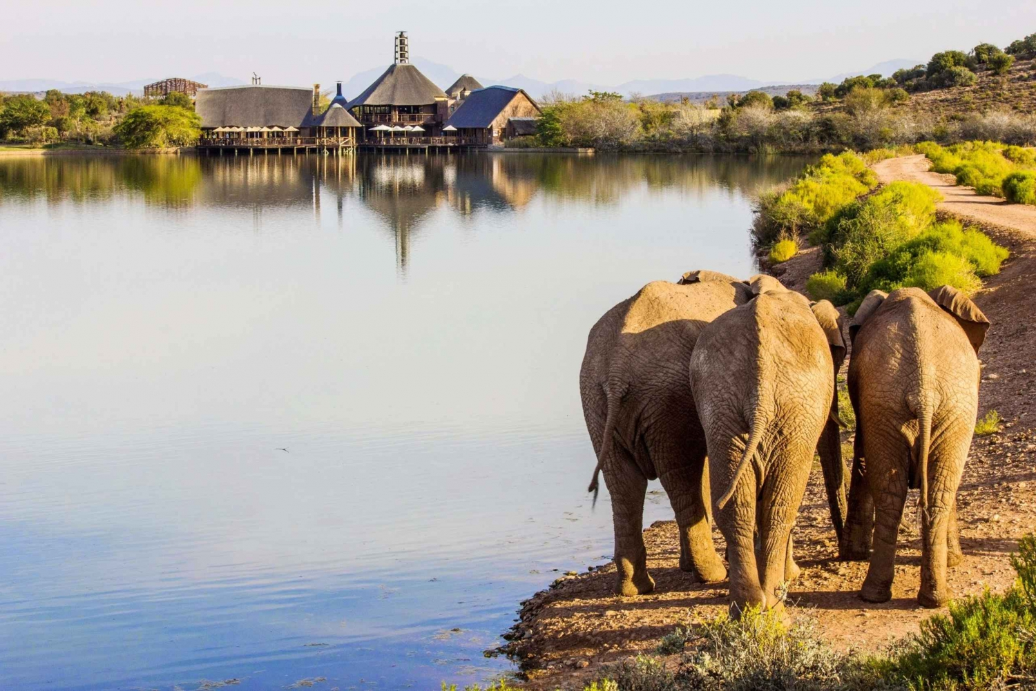 From Cape Town: Wildlife Glamping and Safari Private Tour