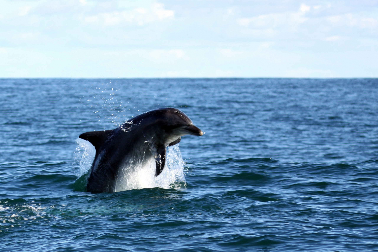 Gansbaai and Big 5 Sea Safari Full-Day Tour from Cape Town