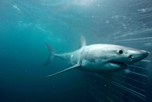 Gansbaai: Shark Cage Dive and Animal Sanctuary Experience