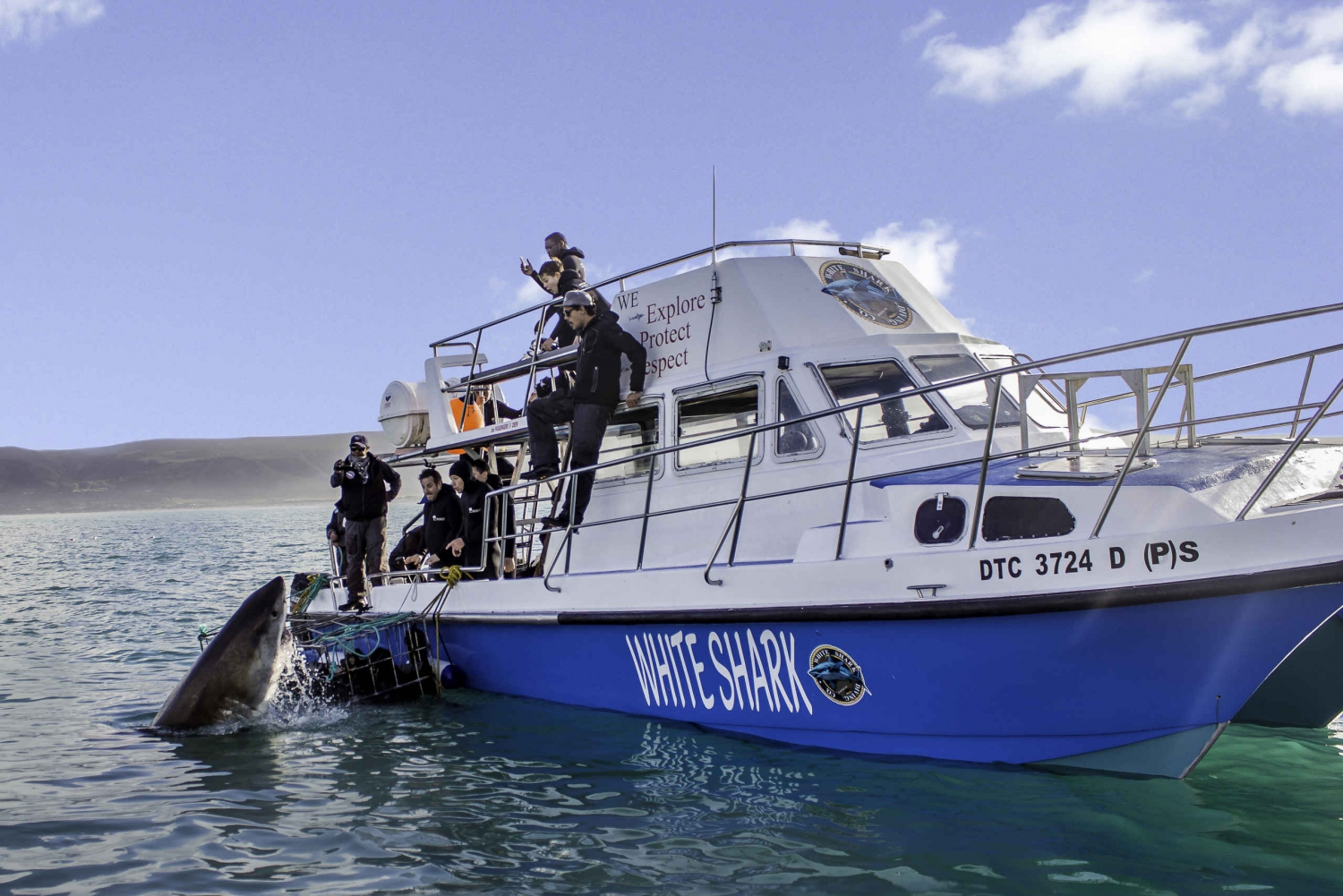 Gansbaai: Shark Cage Dive and Onboard Viewing