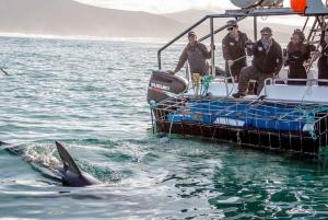 Gansbaai: Shark Dive & Whale Watching Combo Boat Trip
