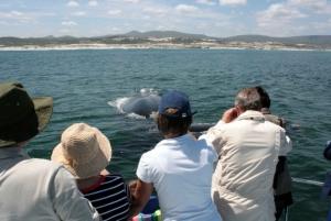 Gansbaai: Whale Watching Trip by Boat