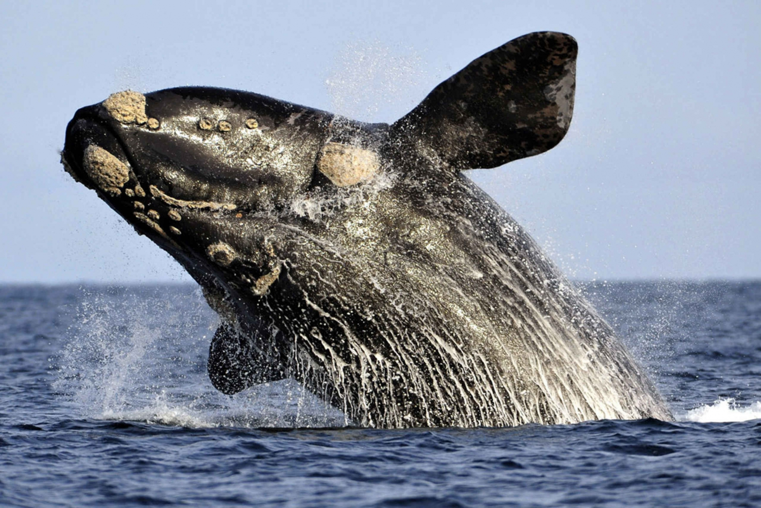 Hermanus: Best Whale Watching Boat Trip from Cape Town