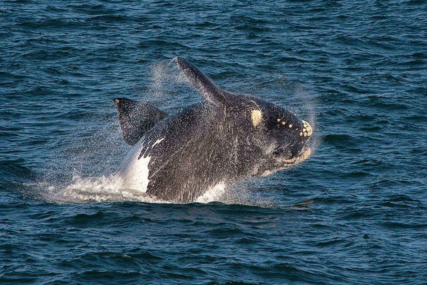 Hermanus Whale Watching & Wine Tasting Full-Day Private Tour