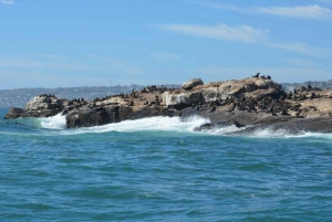 Mossel Bay: Seal Island Boat Trip with Guide