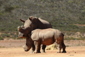Mossel Bay: Sunset Game Drive at Indalu Game Reserve