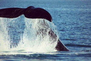 Mossel Bay: Whale Watching and Seal Island Boat Trip