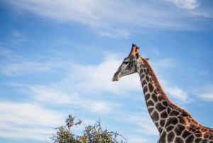 Oudtshoorn: 2-Hour Open Game Drive with Refreshments