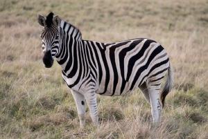 Plettenberg Bay: 2-Hour Horseback Game Reserve Safari