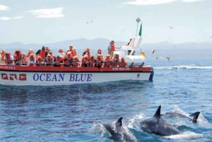Plettenberg Bay: Dolphin and Marine Tour