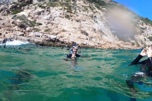 Plettenberg Bay: Guided Seal Swimming Experience