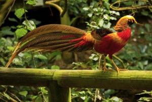 Plettenberg Bay: Monkeyland, Birds of Eden, Jukani Wildlife