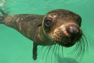 Plettenberg Bay: Seal Colony Viewing Excursion