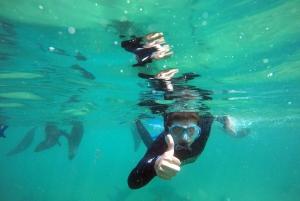 Plettenberg Bay: Swim with Seals