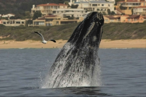 Plettenberg Bay: Whale Watching Boat Cruise