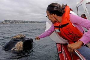 Plettenberg Bay: Whale Watching Excursion