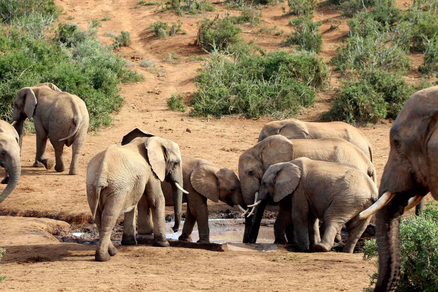 Port Elizabeth: Addo Elephant National Park Full-Day Tour