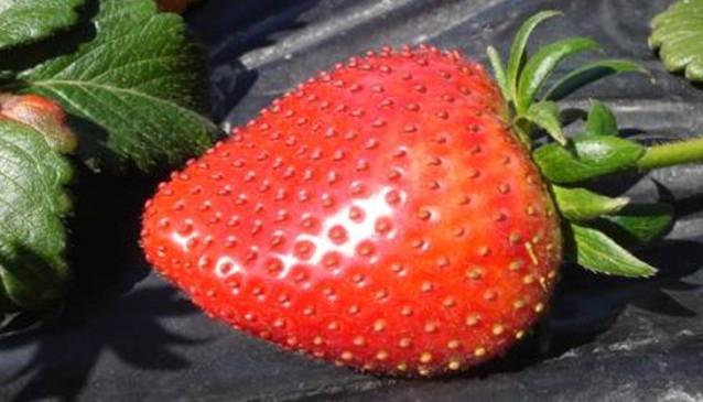 Redberry Farm
