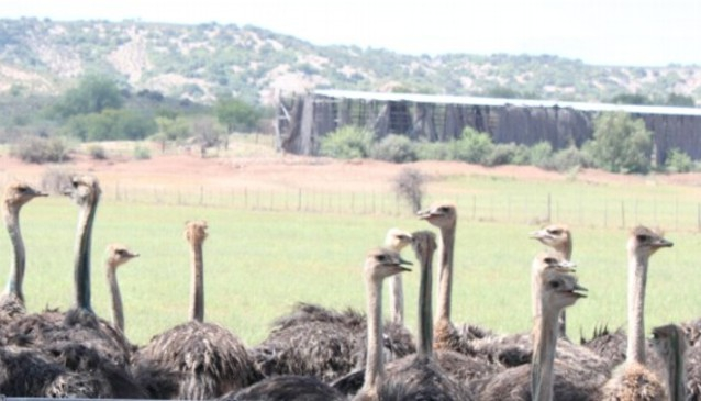 Safari Ostrich Show Farm