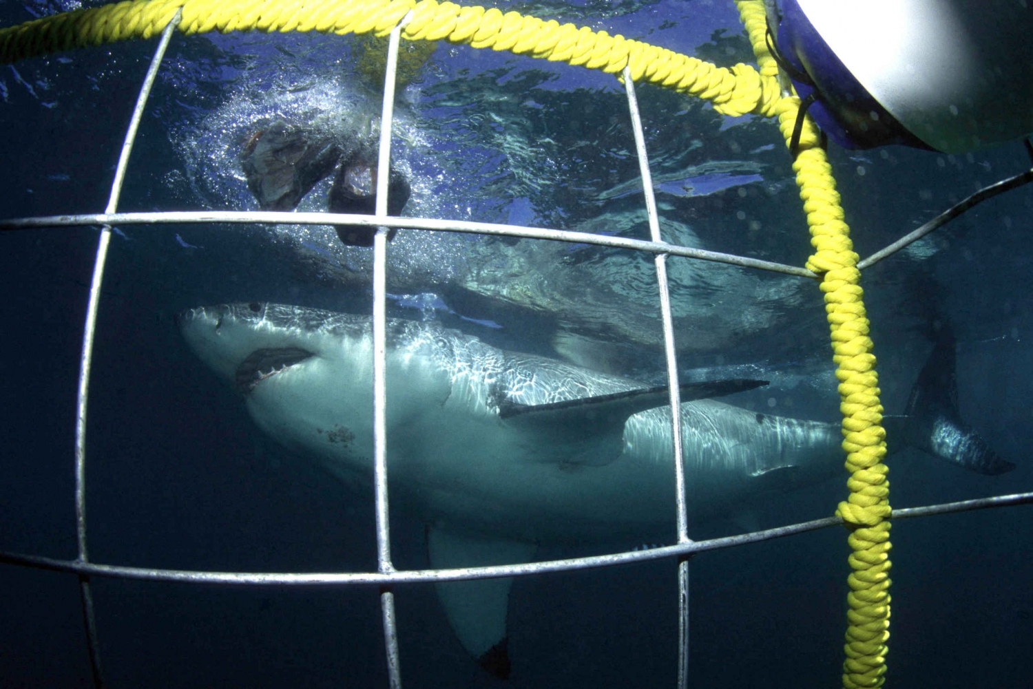 Shark Cage Diving in Gansbaai Leaving From Cape Town