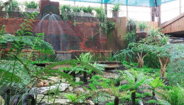 The Fernery Gardens