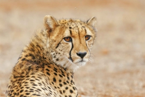 Wild Cat Experience 1-Hour Tour