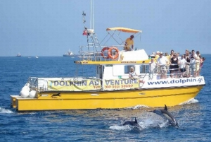 Bay of 1.5-Hour Dolphin Cruise