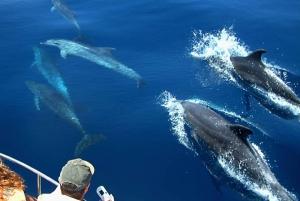 Bay of Gibraltar: 1.5-Hour Dolphin Cruise
