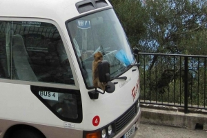 Day-Tour of the Rock: Gibraltar's Apes, Siege Tunnels & More