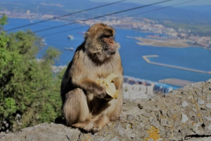 From Seville: Full-Day Trip to Gibraltar