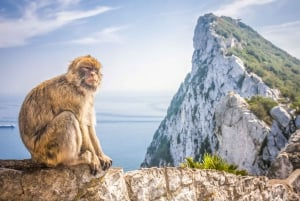 Full-Day Gibraltar Shopping Tour from the Costa del Sol