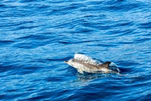 Gibraltar Cable Car & Dolphin Watch