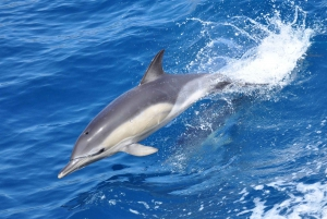 Gibraltar: Dolphin Watching Tour