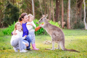 Australia Zoo Full-Day Day Tour from Brisbane & Gold Coast