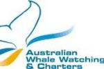 Australian Whale Watching and Charters