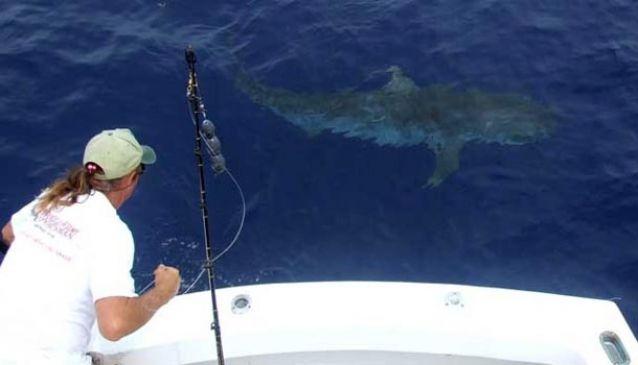 Gold Coast Fishing Charters.