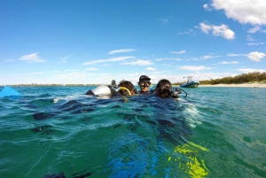 Gold Coast: Introductory SCUBA Diving Experience