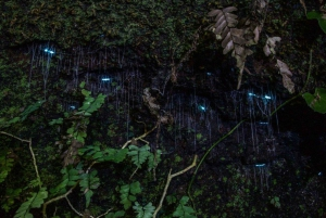 Gold Coast: Nocturnal Rainforest and Glow Worm Tour in a 4WD