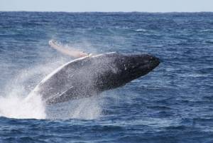 Gold Coast: Whale Watching Cruise from Sea World Port