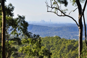 Gold Coast: World Heritage Rain Forest and Wilderness Tour