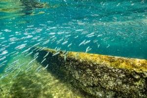 Moreton Island: Dolphin and Snorkel Cruise Adventure