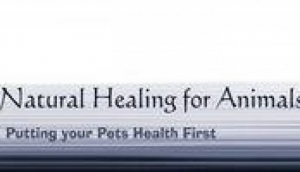 Natural Healing For Animals Alternative Therapy