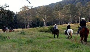 Numinbah Valley Adventure Trails (Horse Riding)