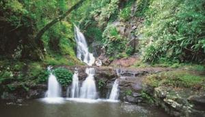 OReillys Rainforest Retreat.