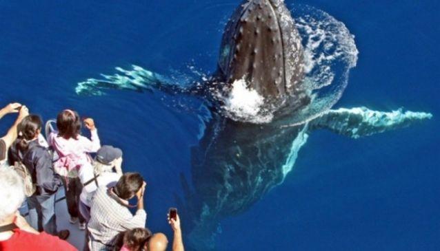 Sea World Whale Watch