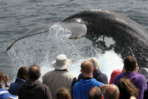 Spirit of Gold Coast 2.5-Hour Whale Watching Tour