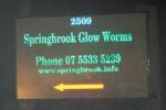 Springbrook Glow Worms