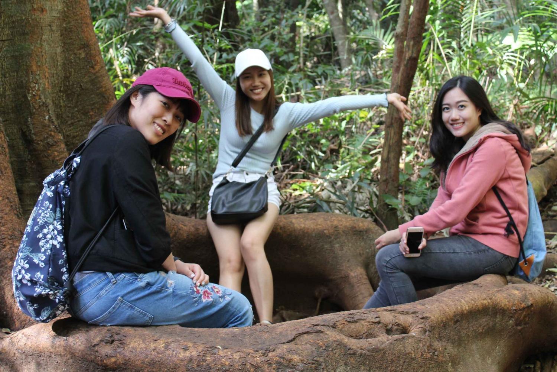 Springbrook - Mount Tamborine National Park Small Group Tour