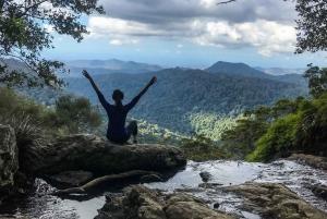 Springbrook National Park and Tamborine Rainforest Day Tour